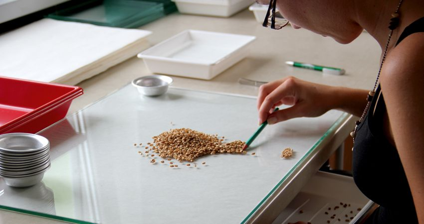 praca w laboratorium nasiennym