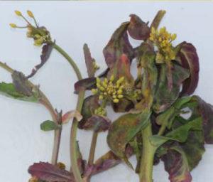 uszkodzone rośliny