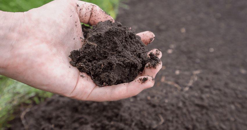 wapnowanie gleby