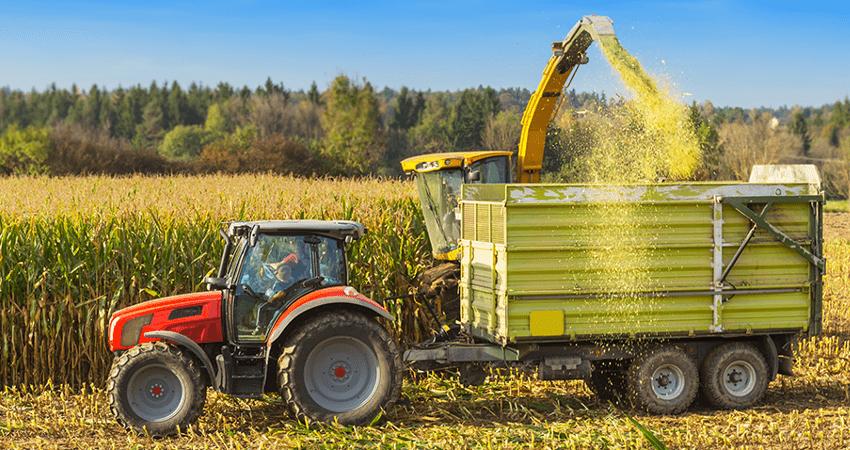 zbiór kukurydzy na kiszonkę