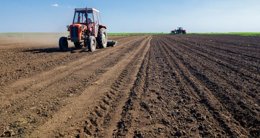 agrotechnika zbóż