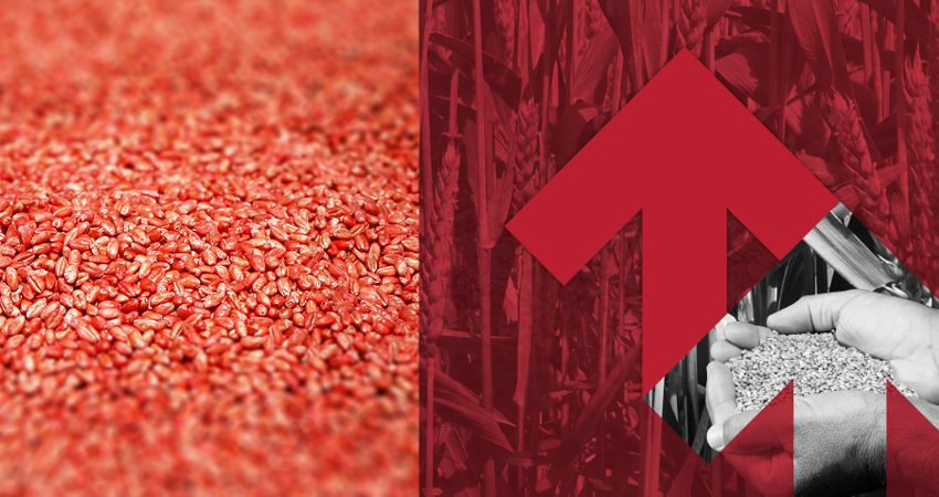 Ewolucja rynku nasiennego w Polsce